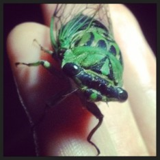 Insect photographs by Julie MacCartee